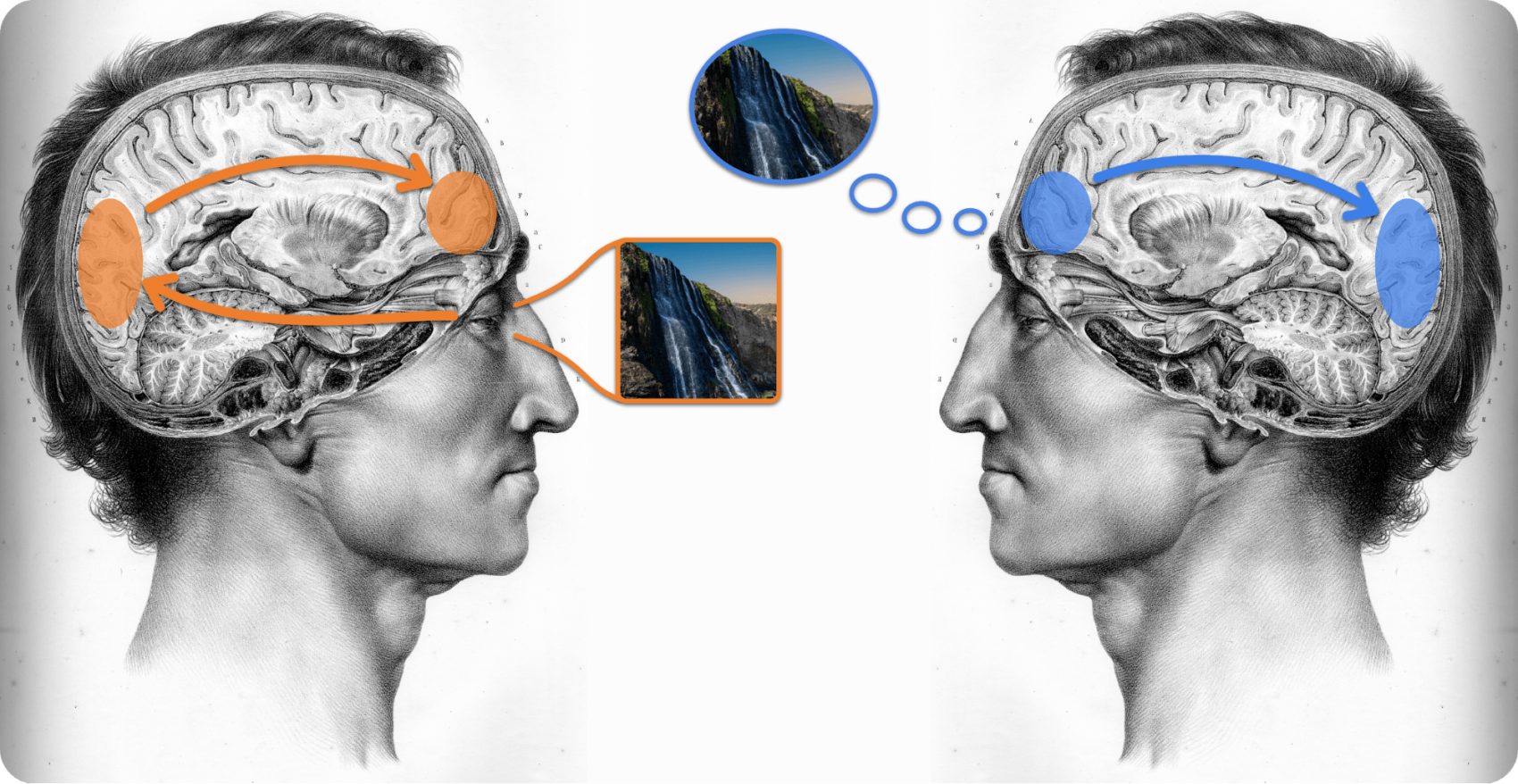 Visually seeing vs mental imagery in the mind's eye
